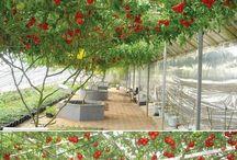 Garden4: hanging vegetables