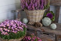 Garden1: flowers / Violet inspiration