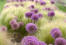 Garden3: grass compositions