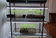 Garden9: little plants