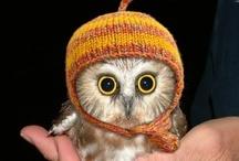 Cuteness in Hats