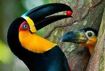 Univers des Oiseaux et Animaux à plumes
