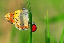 Coccinelles - Papillons - Libellules et autres petits insectes