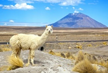 South America Adventure / by travel.com.au
