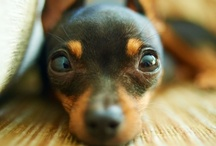 "Min Pins / by ""The Whimsical Lady"""