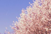 Regents Park Healing Δ