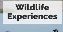 Wildlife Experience Travel / Get inspired by the beauty and fascinating lives of worldwide wildlife. Learn more about how animals live, habitat, wildlife tourism, wildlife encounters and wildlife conservation