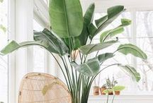 Square Fox   loves Plants / Indoor or outdoor, some greenery adds a lot to a home!