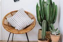 Square Fox   loves indoor plants