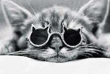 I Love Cats... / by Lisa Kalinowski
