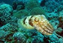 Cuttlefish / Cuttlefish: the dons of maritime self-expression & Jellyfish: part oceanic orchid, part offal parachute, part ruched lampshade, part bobbing assassin