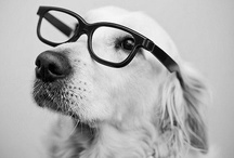 SUPER Cute! / Cute pet photos look GREAT on a photo canvas! Here's a collection of fun photo ideas, and just all around adorable pics of pets. / by Canvas People