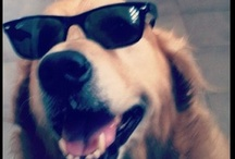 Instagram Dogs / Instagram+dogs=adorable! There's something about a dog, some photo filters and a tilt shift lens that we at Canvas People just love!
