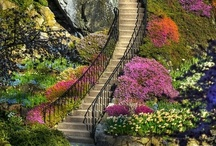 Stairways & Bridges / by Michelle Fedele