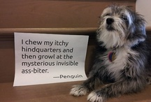 Dog Shaming.......Funny(but sad...poor dogs being shamed) / by Michelle Fedele