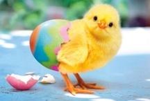 Easter  / by ~~♥♥ Cняiƨtiиɛ ♥♥♥ Cσσκ ♥♥~~