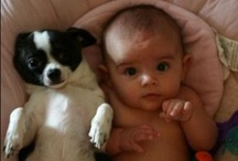 Babies or Puppies / by Animal Practice NBC