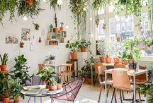Green Thumb / Plants and Plants