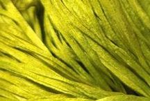 Color Inspiration: Chartreuse / We love Chartreuse! Get your color inspiration for this gorgeous color here.