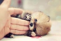 Adorable Animals / I've never owned a pet but if I did, they would be cute like these ones!