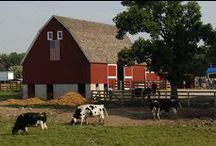 Back On The Farm / by Steve Hoffacker - New Home Sales Training