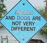 My dogs (omien koirien kuvat sekä sopivia mietelauseita ja muistokirjoituksia)