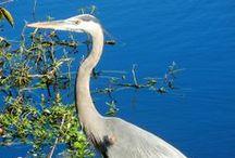 South Florida Wildlife