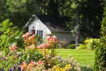 Plants & Gardening / Gardening, landscaping and backyard ideas