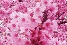 Pretty In Pink / Flowers, blooms, and other beautiful attractions in pink and pink tones.