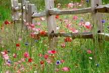 Wildflowers / Beautiful flowers growing wild in a range of inspiring colors