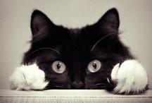 Here, Kitty, Kitty
