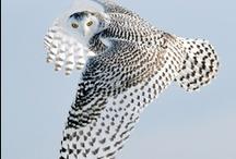 FAUNE - Air / Oiseau / Papillon  - Tout ce qui a des ailes / by Colette Maillé