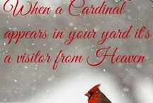 Cardinals / One of my fav birds! / by Susan Clydesdale