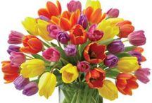 Long live the tulip! / by Ramona Conrad-Cooper