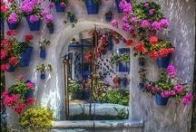 Windows / by Leilani Olson Camden