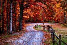 Falling for Fall / by Karen Brake
