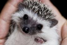 Hedgehogs / by Courtney Nix