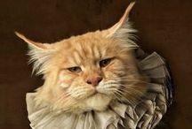 CATS, KITTEN & KITTIES / Big & Little, Sweet & Grouchy - heavy on the Ragdolls like my Twinkie / by Aleta Ford Baker