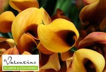 Valentins Blumenträume / Eine riesige Auswahl an zauberhaften Blumen bietet Dir Valentins Blumen- und Geschenkversand. Besuche uns auch unter - www.valentins.de