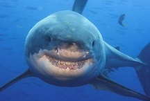 Sharks & Sea Life