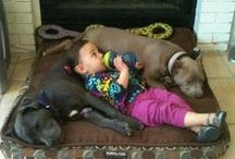Love these Pitbulls / by Jessica Cundiff