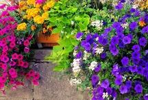 Gardening / by Mindy Dolack