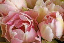Flora / Blooms / by Irina Vinnik