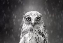 Animales / by Nicolas Riofrio