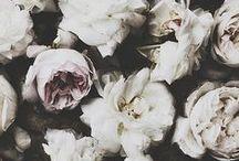 "COUNTRY (kəntrē) / ""The poetry of the earth is never dead."" -John Keats / by dnilla | Elle Daniels"