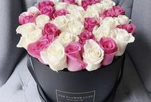 Fresh Cut Roses / Fresh Cut Roses, FREE Delivery in the DC Metro Area.