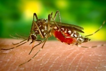 mosquito / by Nikki Gruber