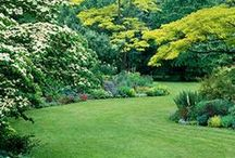 Home decor: Gardening / Kertészet, növények, virágok