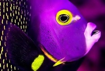 Art by God - Purple / by Miss Guylaine Martel