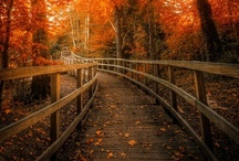 Autumn / by Nikki Gruber